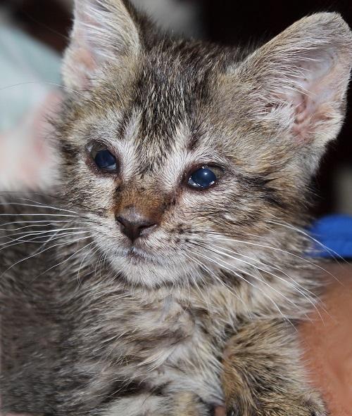 Verschenken junge katzen schweiz zu Katze Kaufen