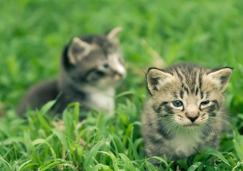 Katzen basel baby gratis Stiftung TBB
